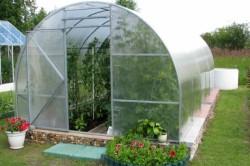 Пример тепличных растений.