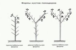 Схема форм кустов помидоров.
