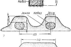 Схема выращивания арбузов в грунте.