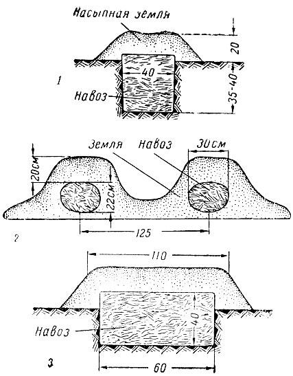 Схема выращивания арбузов в