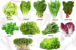Различные виды салата