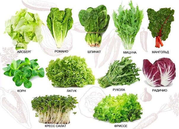 Как посадить салат дома