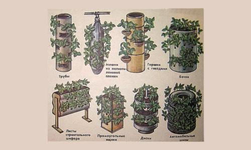 Виды емкостей для выращивания клубники