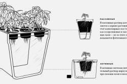 Схема способов гидропоники для перца