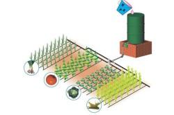 Схема размещения системы капельного полива на дачном участке