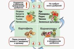 Совместимость овощей по обилию подкормки