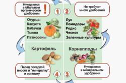 Схема соседства овощей по типу удобрений.