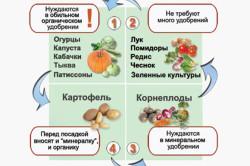 Схема соседства овощей по типу удобрений