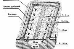 Схема устройства грядок по Митлайдеру.