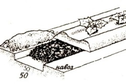 Схема удобрения грядки